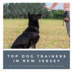 dog trainers in new jersey