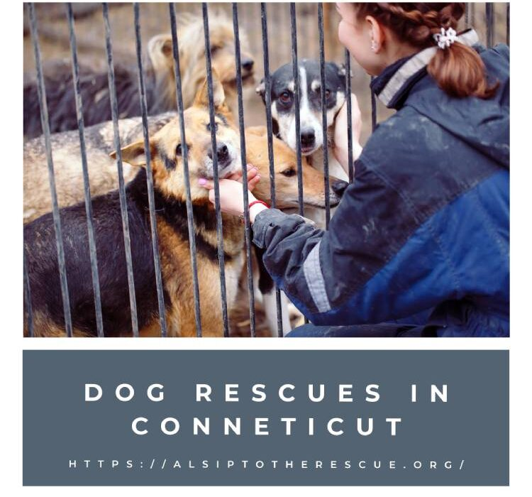 Dog Rescues and Shelters in Conneticut