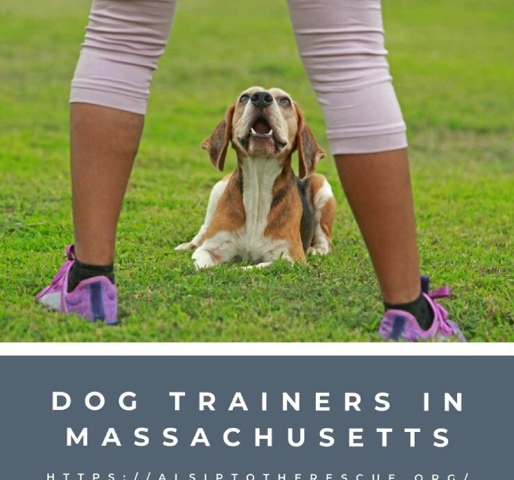 Dog Trainers in Massachusetts